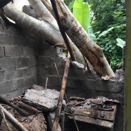 Pohon Tumbang di Br.Dinas Tegalasah Kaja